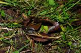 Earthworm_midden.jpg
