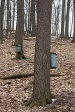 Trees with collecting buckets