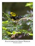 Black-throated Green Warbler-006