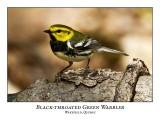 Black-throated Green Warbler-007