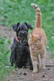 Betine and Bajaz
