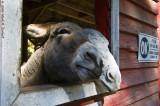 Mule Mates