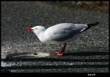 27 april Whitish bird