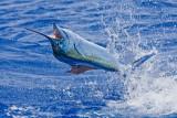 Fish and Anglers
