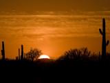 Tucson Area