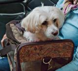 Luggage + Dog = Carry-On Dog :)