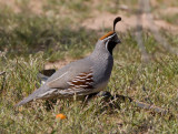 Other critters encountered in Arizona - Mostly birds