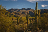 In the McDowell Mountains