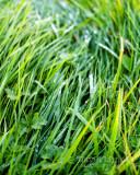 Oct 10: Wet Grass