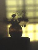 Flowershadow.