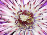 BFLO. Botanicals