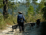 Old goat herd at Santiao