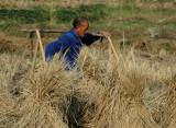 Rice farmer near Zhoulin