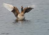 20091202 027 Canada Goose Hybrid NX2 - SERIES.jpg