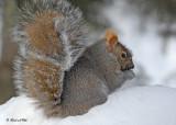20100110 148 Squirrel SERIES.jpg