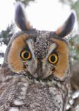 20100430 140 Long-eared Owl SERIES.jpg