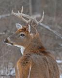 20071128 114 Deer Buck.jpg