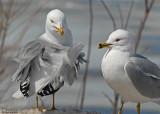 20080407 037 Sea Gulls SERIES.jpg