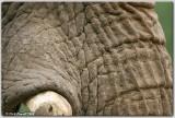 Elephant Skin @ 500mm