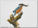 Kingfisher Photos