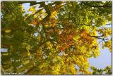 Autumnal Ripples 1