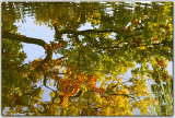 Autumn Ripples 2