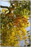 Autumn Ripples 3