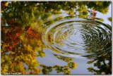 Autumn Ripples 4