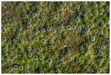 Algae Fizz