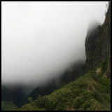 Iao Valley Rainforest and Fog