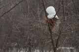 Bird Nest in Winter