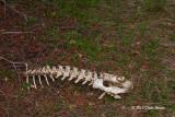 Deer Remains