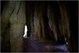 Inside the Quinault Big Cedar