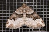 Moth On Screen