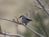 Boulder Yard Birds (3rd St)