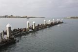 Sea Lions on pier at Moss Landing