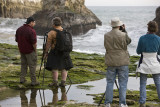 Shark's tooth Beach with Frans Lanting teaching