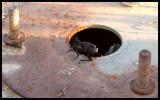 0112 - El próximo agujerito lo va a explorar Rita la Cantaora