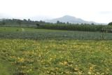 Campos de Cultivo de Verdura