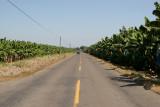 Extensas Plantaciones Bananeras en la Ruta a la Cabecera