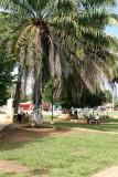 Area Verde del Parque Central