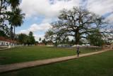 Ceiba al Centro del Parque y Frente a la Iglesia