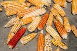 Maiz Cultivado en la Region