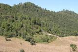 Plantacion de Maiz en la Montañas del Municipio