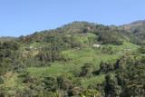 Montañas y Plantaciones a Orillas de la Ruta a la Cabecera