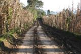 Camino Rural del Municipio