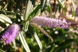 Flores en el Parque Central