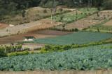 Cultivo de Verduras en las Afueras de la Zona Urbana