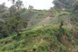 Las Siembras son Comunes en los Terrenos Accidentados