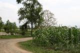Area de Siembras Cercanas al Rio Polochic